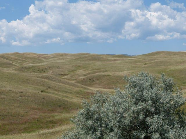 Elsom Ranch Road, Buffalo, WY 82834