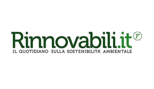 L'olio di palma ha ucciso oltre centomia oranghi