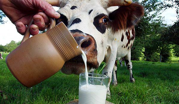 List of Dairy Products to Eat