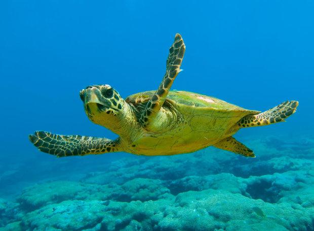 Παγκόσμια Ημέρα Χελώνας