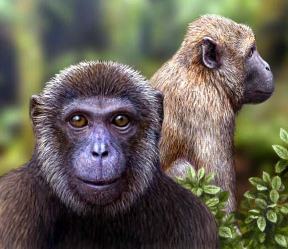 Artist's impression of the newly discovered Rukwapithecus, front, and Nsungwepithecus, right (Mauricio Anton)