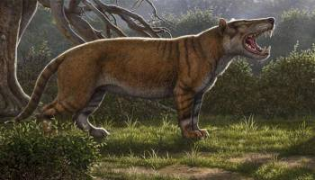 Simbakubwa kutokaafrika, a hyaenodont that was larger than a polar bear. Image credit: Mauricio Anton.