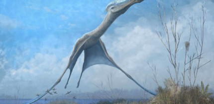 A reconstruction of the giant pterosaur Hatzegopteryx launching into the air, just after the forelimbs have left the ground. Image credit: Mark Witton.