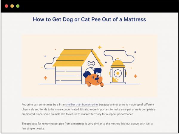 How to Get Dog or Cat Pee Out of the Mattress
