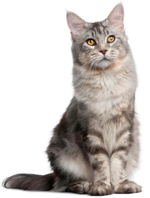 Kode Suara Kucing Menggeong Panjang