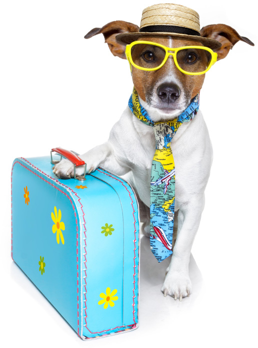 https://i2.wp.com/cdn.sheknows.com/articles/2013/05/isolated-dog-suitcase.jpg