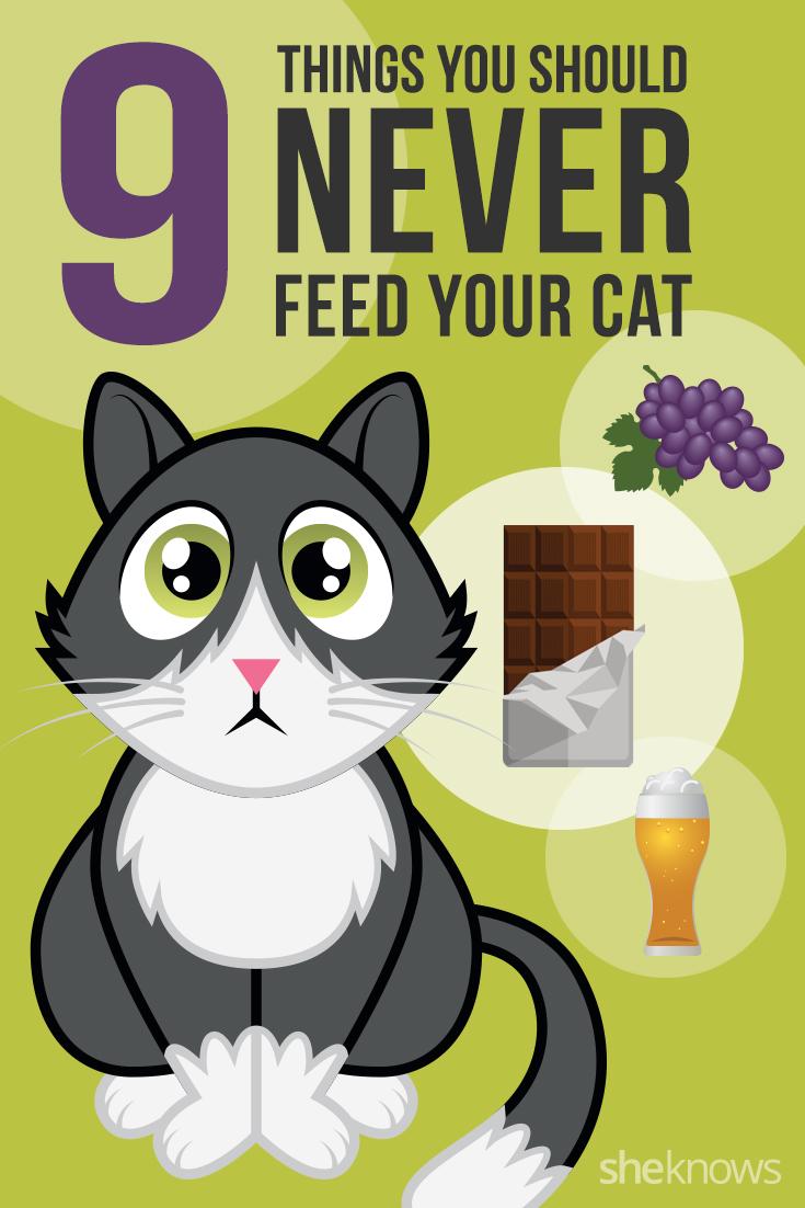 9 Los alimentos nunca se debe alimentar a su gato
