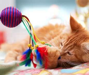 Image result for cat playing with toy