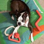 Ellen Van Dusen Talks Dog Beds Design And Snips Wild One