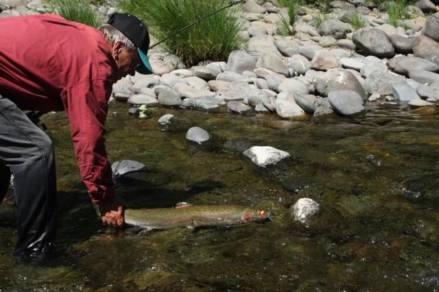 landing steelhead fish trout salmon