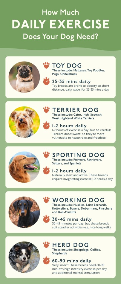 Guide of how much exercise a dog should get.