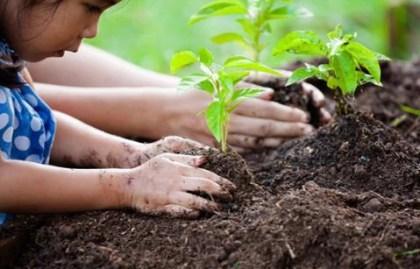 Taimenten kasvatusta maahan