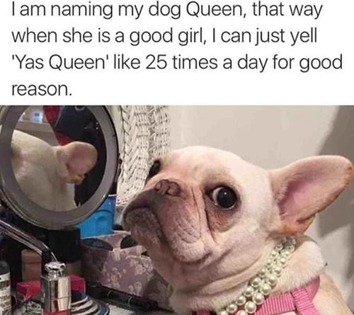 Best French Bulldog Memes 2018 Oui Oui Frenchie Oui Oui Frenchie Blog Blog