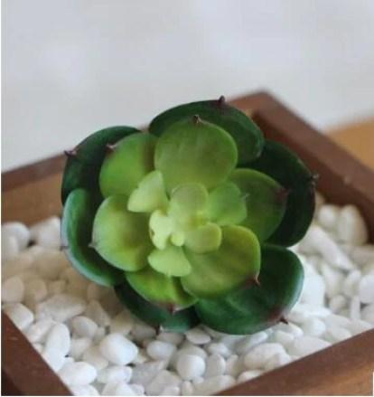 「stone lotus plant」的圖片搜尋結果