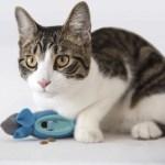 Indoor Hunting Feeder For Cats Roar Cats Roar Cats