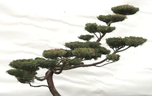 arbre nuages zen 3 chouettes 4