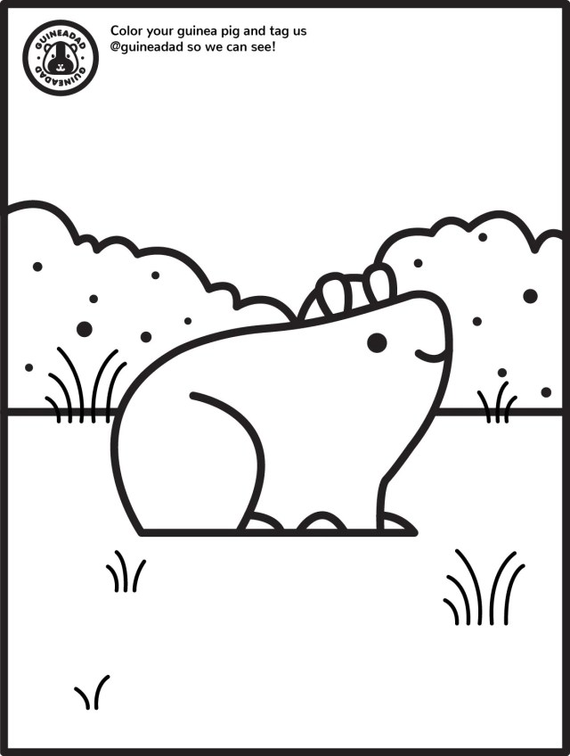 Guinea Pig Coloring Pages – GuineaDad