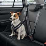 Skoda Dog Guards Genuine Skoda Accessories Horton Skoda