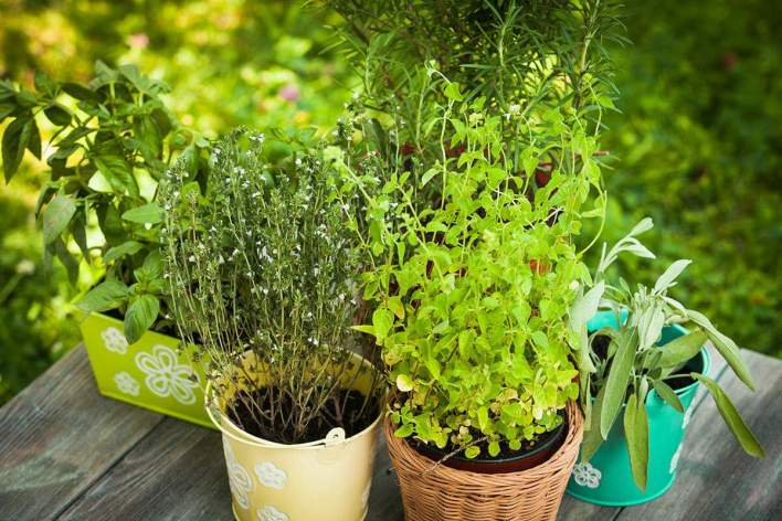 32 medicinal plants to keep at your home always | nurserylive