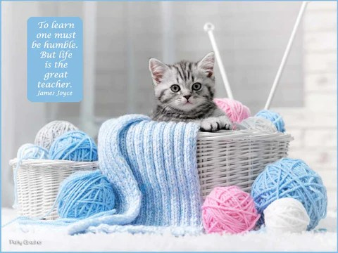 Small tabby kitten in yarn basket