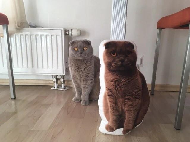 personalized custom cat pillow