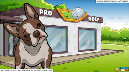 A Basenji Dog With A Nice Form and Las Vegas Strip At Night     An Intrigued Boston Terrier Pet Dog and A Country Club Golf Shop Background