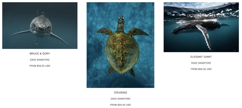 aquatic animals in david sanford's portfolio