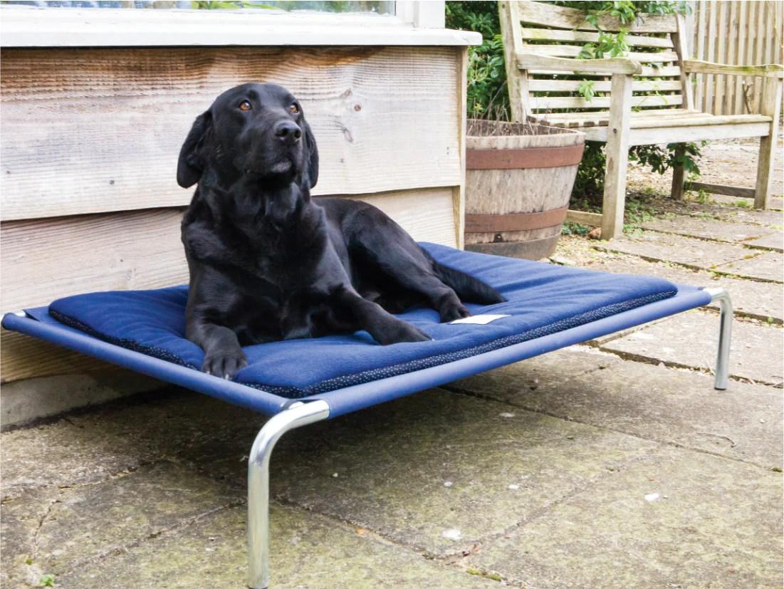 Raised Dog Beds By Berkeley Dog Beds Uk Berkeley Dog Beds Limited