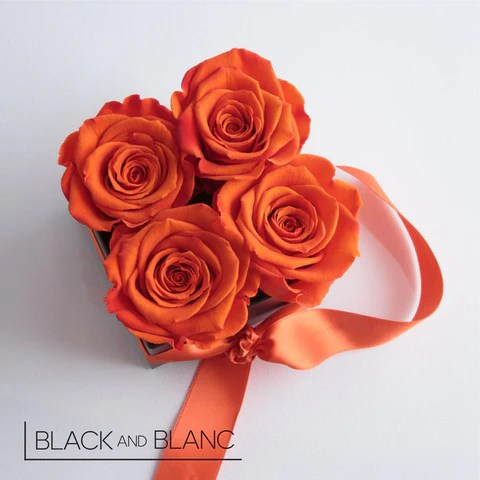 the meaning of color in roses, unusual colors in roses, orange rose, peach rose, burgundy rose, purple rose, green rose, blue rose, black rose.
