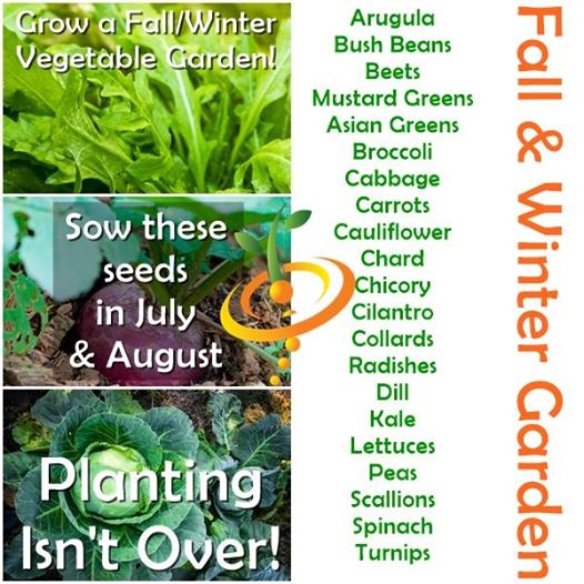 Grow A Fall Winter Harvest Plant These Seeds In July August Seedsnow Com