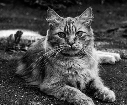 top 100 des fonds d ecran chat tout
