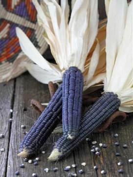 """Résultat de recherche d'images pour """"Hopi blue corn"""""""