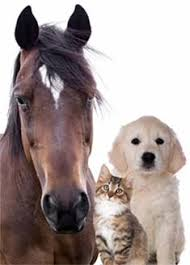 Dog Cat And Horse Testing Modern Allergy Management
