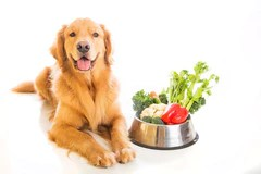 Vegetables good for dogs