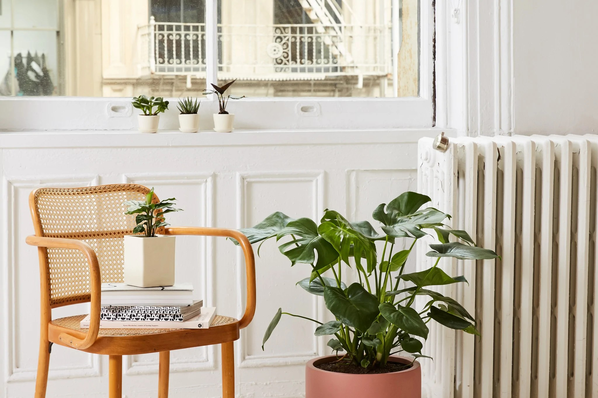Caring For Different Sized Houseplants Plant Care And Tips The Sill