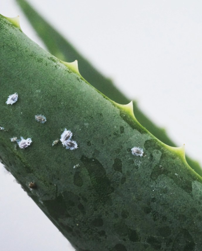 How to Identify and Treat House Plant Pests
