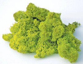 Image result for moss.