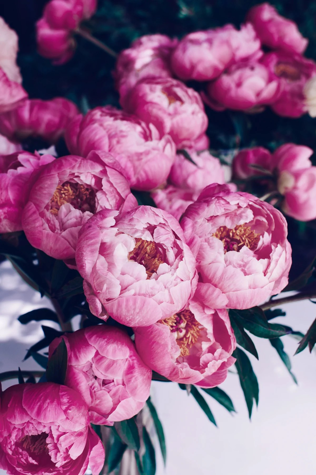A Suite Treat Just For You Free Peony Bouquet Device Wallpaper Downlo Suite One Studio