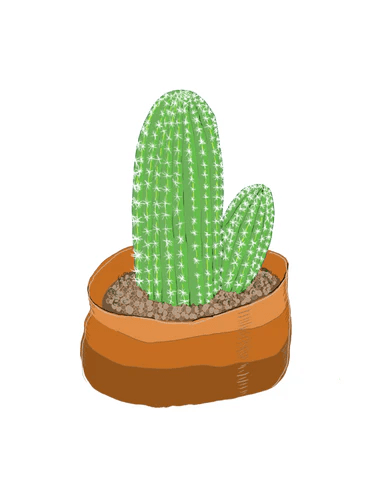 Cactus | Illustration by Wren McMurdo