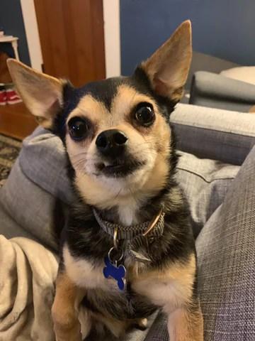Louie supports Hillary (Herbivore's HR + Payroll Coordinator)