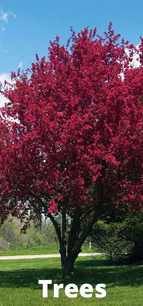 Garden Plants For Sale Calgary Calgary Plants Online