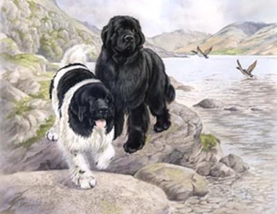 The Explorers Print BIG Gentle Dogs