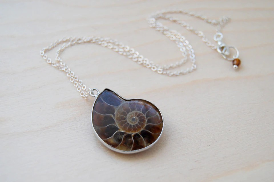 Ammonite Fossil Shell Necklace Fossilized Shell Necklace