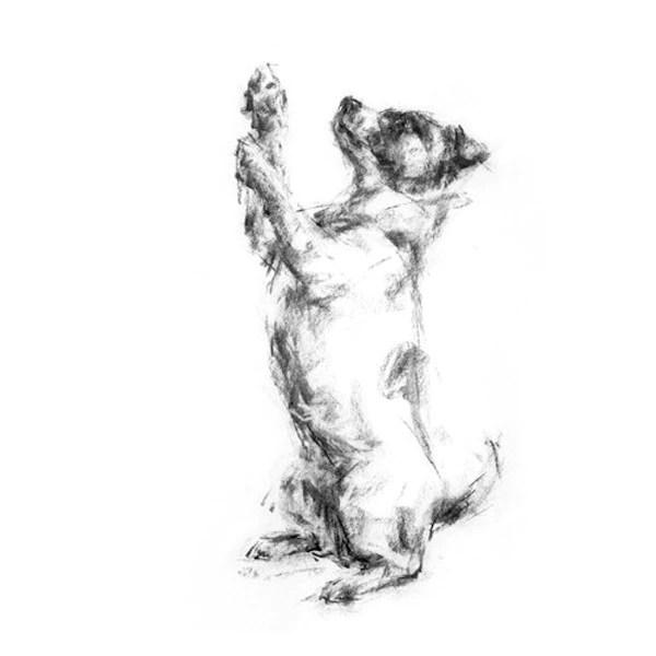 Begging Terrier Sketch Print PaintMyDog Dog Art