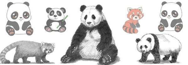 Le Dessin De Panda Guide Complet Petit Panda