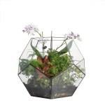 Handmade Extra Large Large Pentagon Glass Geometric Terrarium For Succulents Fern Moss Airplants Ncypgarden