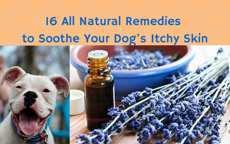 16 All Natural Remedies To Soothe Your Dogs Itchy Skin