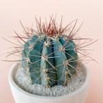 June Blue Cactus Handmade Forest Green Ceramic Planter