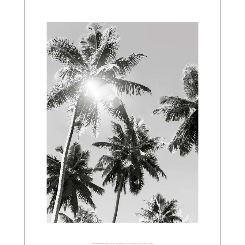 Vintage Black And White Poster Palms