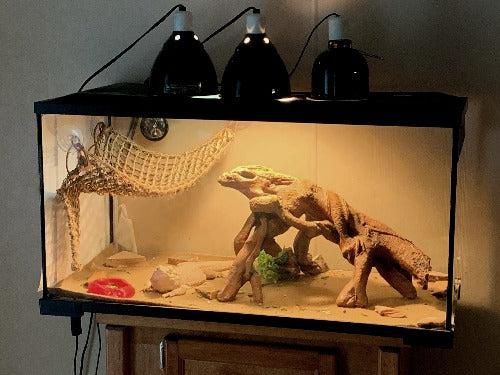 bearded dragon tank setup 101 how to